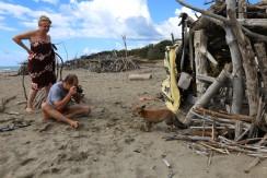 Am Strand pirschen sich die Füchse durch die Treibholzhütten an ...