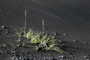 grünes Gras und schwarze Düne