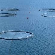 Fischfarm im Berufjördur, Ostküste