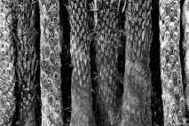 Palmen- und Baumfarnstämme