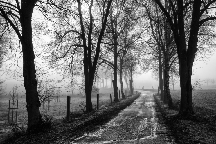 IMG_8821-Allee im Nebel
