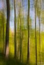 Frühlingswald, bewegte Kamera