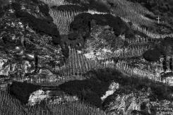 Weinberg oder Irrgarten