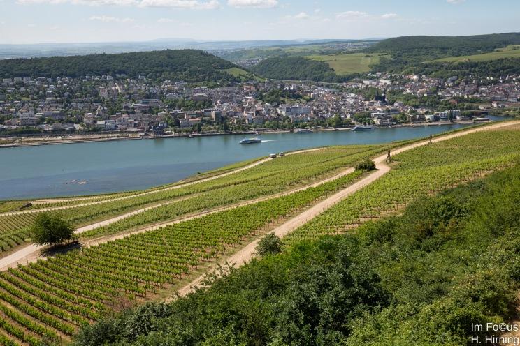 Blick vom Niederwald auf Bingen